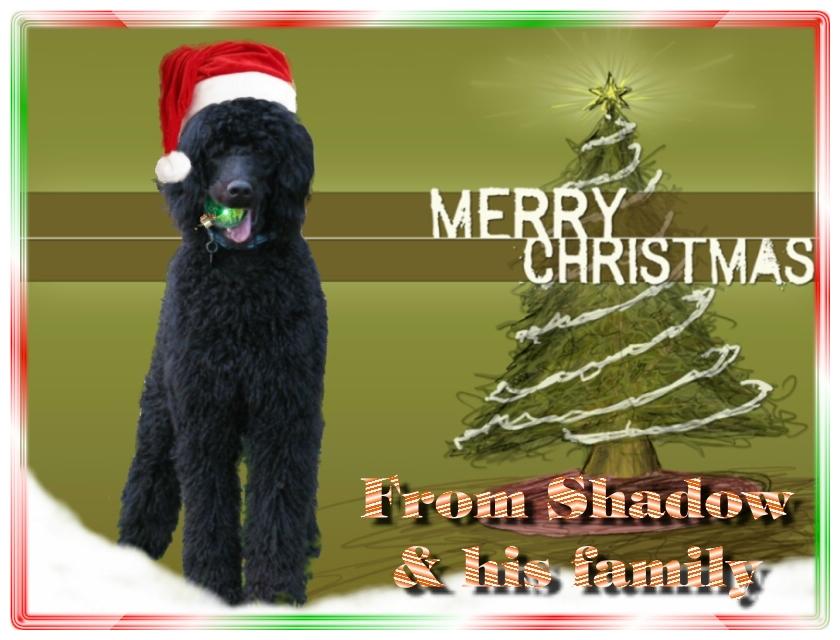 Name:  shadow-christmas-card-3.jpg Views: 1801 Size:  291.5 KB