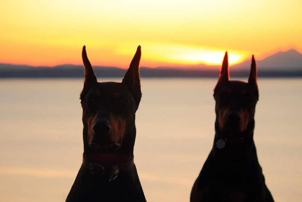 Name:  Dogs sunset.JPG