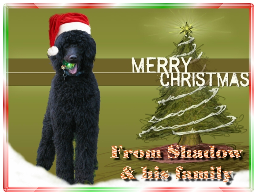 Name:  shadow-christmas-card-3.jpg Views: 674 Size:  291.5 KB